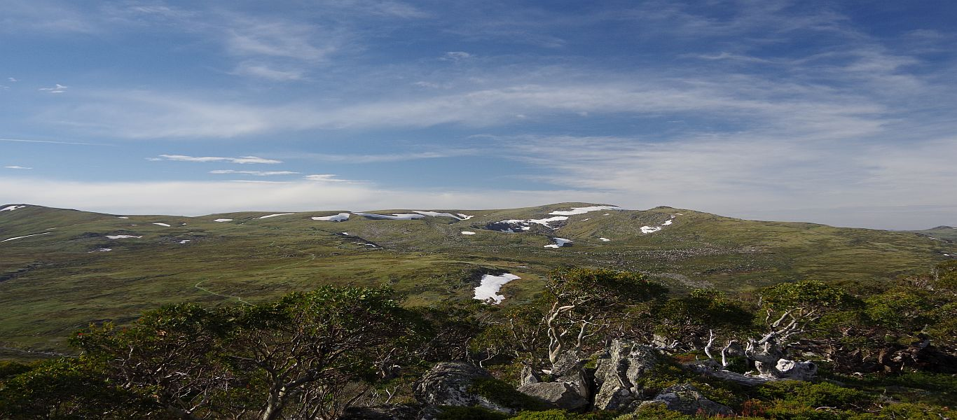 Wandern in Ostaustralien, Australische Alpen, Thredbo, Meadows – Merrits Nature Track