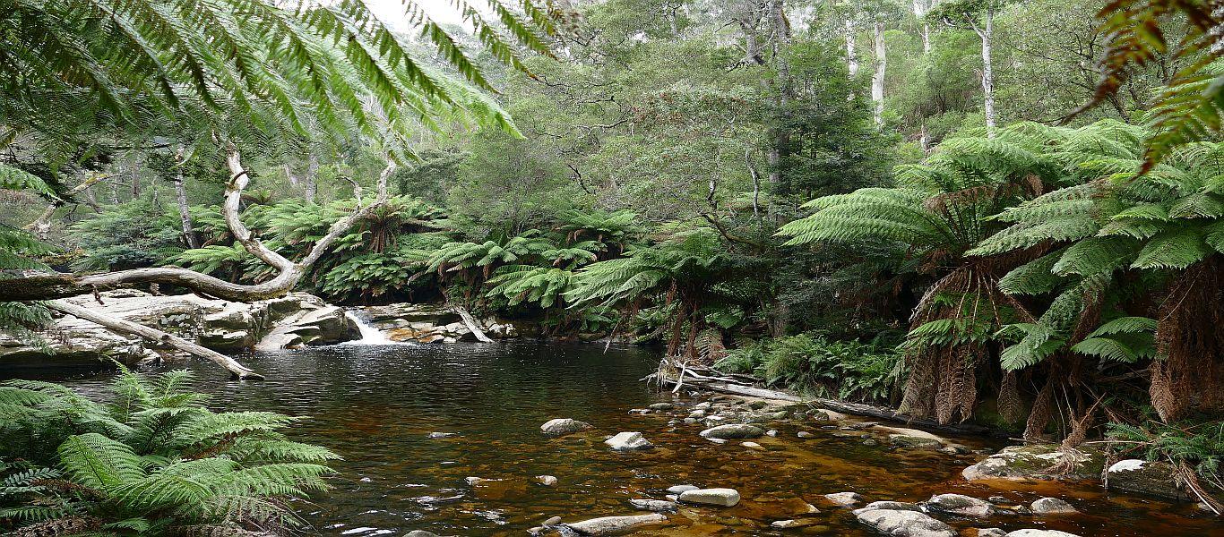 Wandern auf Tasmanien, die Wasserfälle im Nordosten